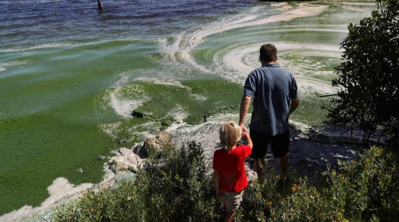 Florida's Toxic Algae Blooms